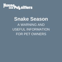 Snake season warning and useful information